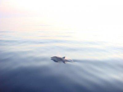 Mediterraneo Dimensione Vela Whale Watching