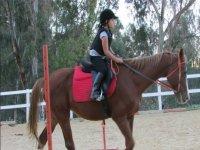 Corsi equitazione per bambini