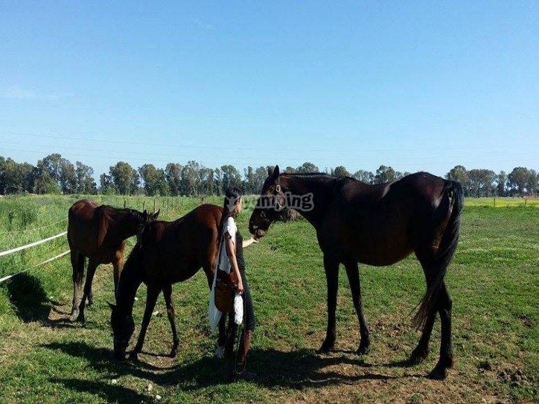 A contatto con i cavalli