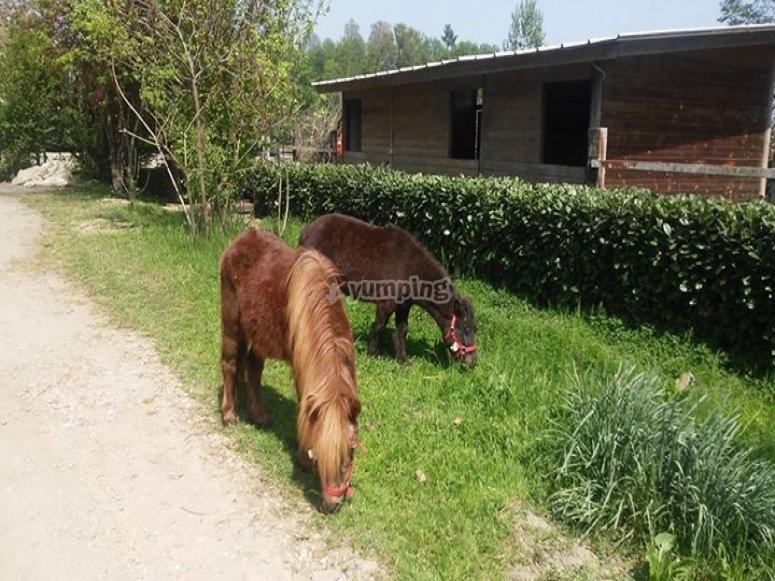 Insieme ai pony