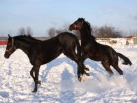 Lezioni base di equitazione americana Torino