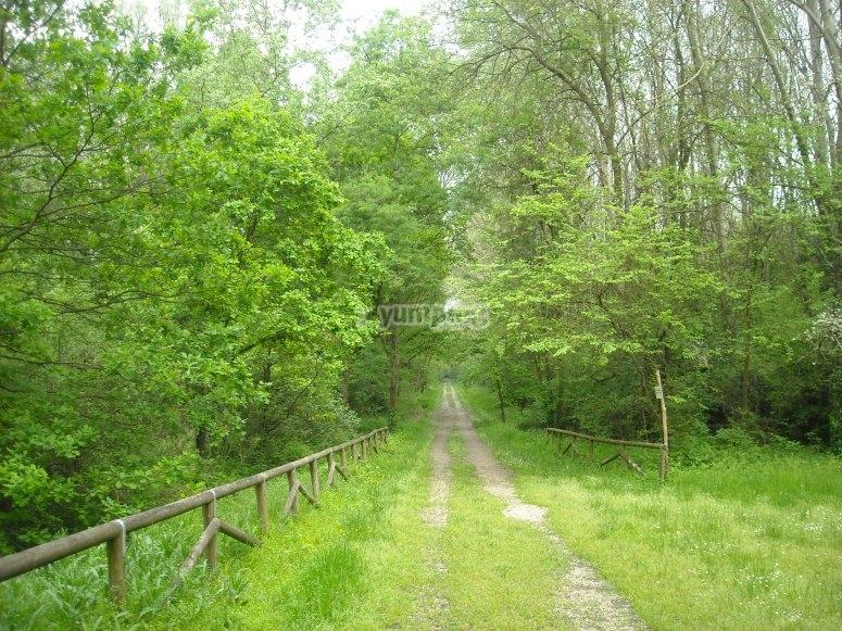 Itinerari nel bosco