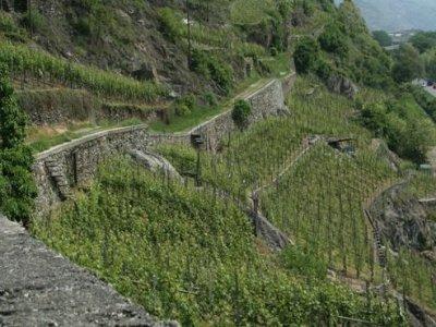 Valtellina Incoming Enoturismo