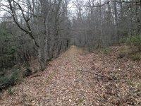 Foresta Umbra -Sentiero dell'antica ferrovia utilizzata per il trasporto del legname