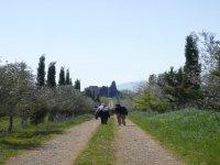 primavera presso Pienza in Valdorcia - Toscana