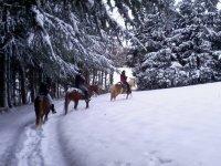 Passeggiate sulla neve