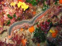 la fauna subacquea