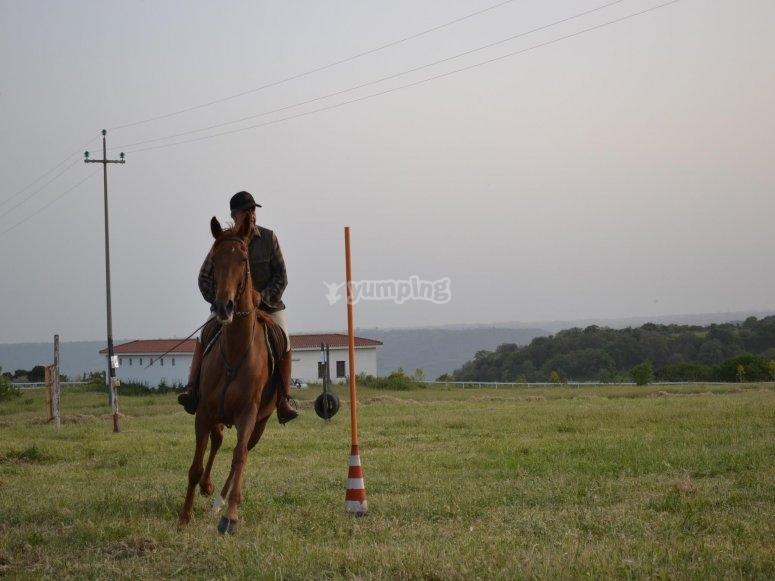 cavallo e furia