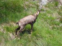 Fauna di alta montagna