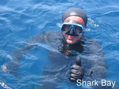 Shark Bay Diving