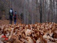 Passeggiando per i boschi