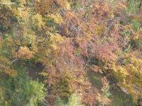 i colori del autunno