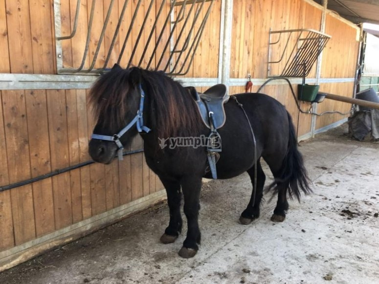 il nostro pony