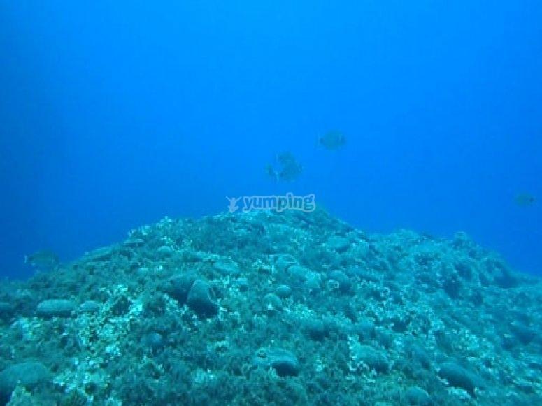 Underwater rock -9 99- The buoy