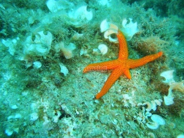 A beautiful starfish