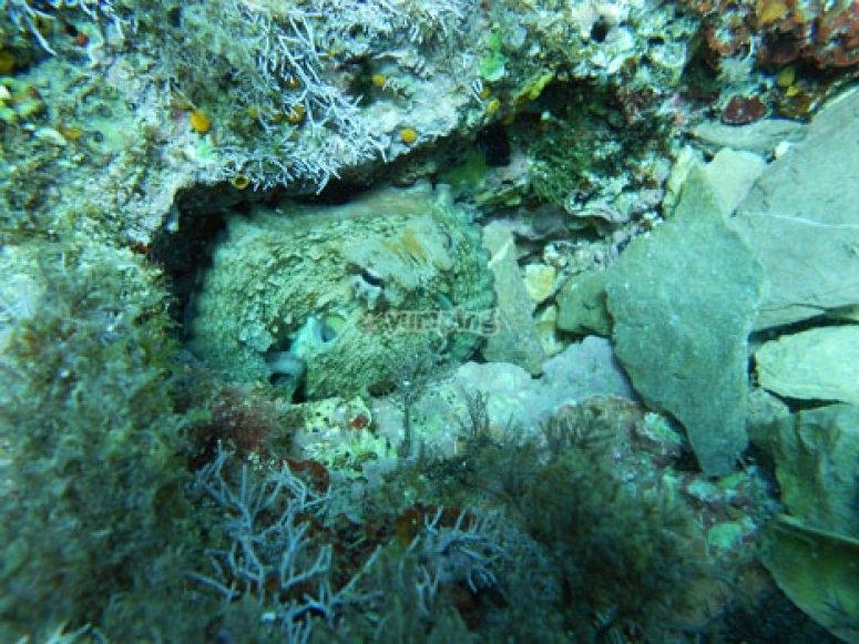 In fondo al mare