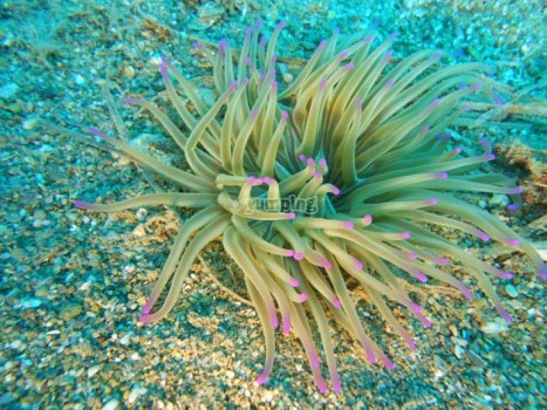 Pianta marina