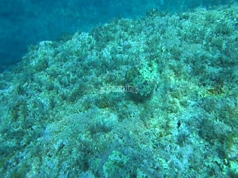 Vegetazione marina