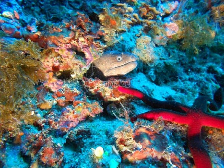 Pesce e stella marina