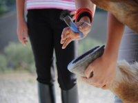 Prendendoci cura di un cavallo