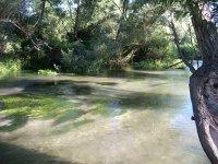 fiumi ricchi di pesci