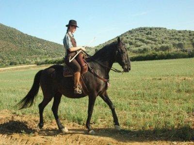 Cavallo in Maremma