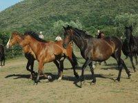 Splendidi equini