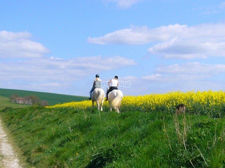 passeggiata a cavallo nelle praterie