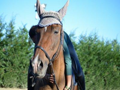 Lezione di equitazione principianti sul Ticino