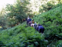 Trekking equestri immersi nella natura