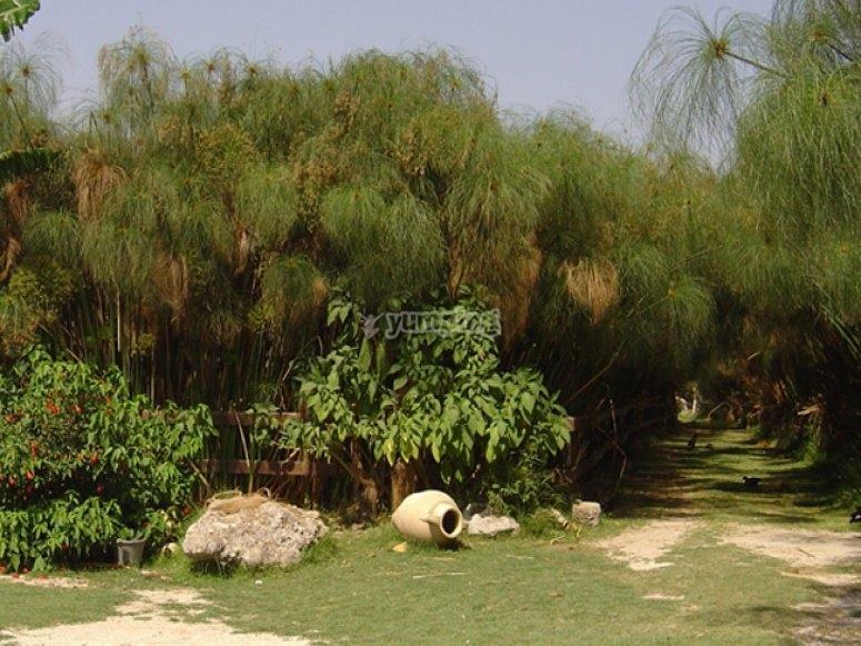 Piantagione papiro