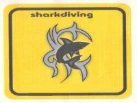 Shark Diving Diving