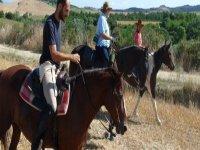 Cavalli mansueti