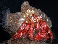 Rare marine species