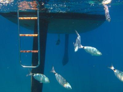 Regate - Charter - Vela Noleggio Barche