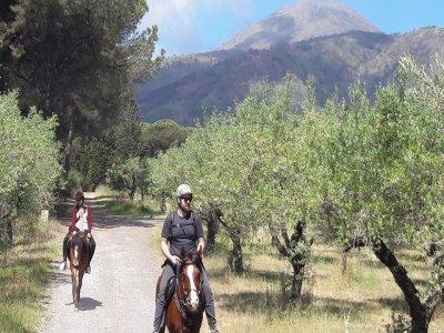 Horses Land Vesuvio