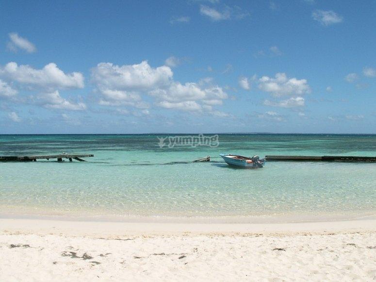 Arcipelago Guadalupe.jpg
