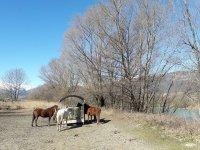 Riposo per i cavalli