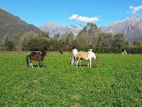 habitat naturale per i cavalli