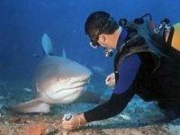A tu per tu con uno squalo!