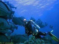 Diving Buccinasco