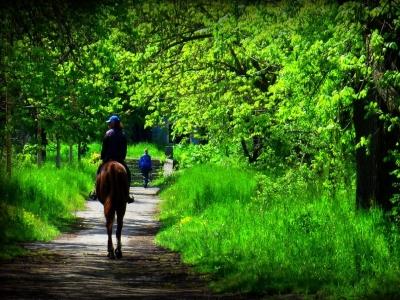 Escursione a cavallo 1 ora Borso del Grappa