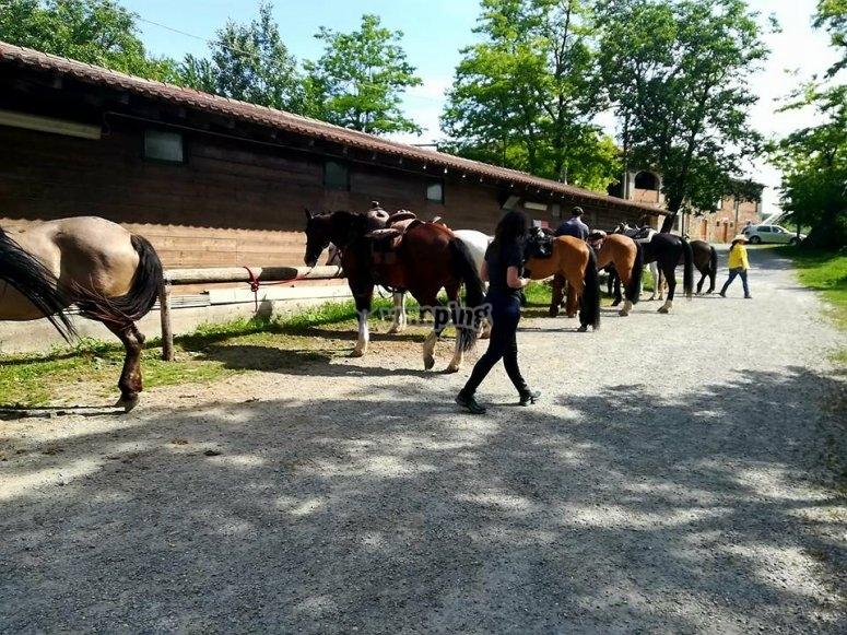 I nostri amici cavalli