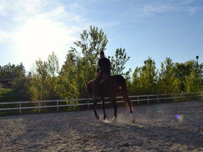 Lezione di Equitazione della durata di un'ora