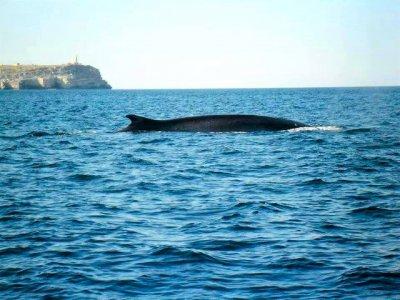 Wild Tuna asd Whale Watching
