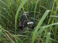Mimetizzato tra l'erba