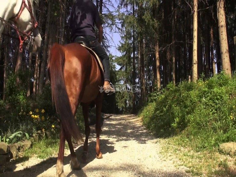 A esplorare il bosco