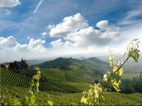 In the Langhe to discover the wines