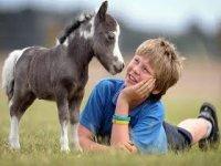 Pony Club Corsi di Equitazione e cura del cavallo, giochi di fiducia a terra - Corso di equitazione con il pony per i più piccoli. Lezione di prova gratiuta