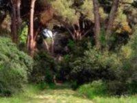 Corsi di orientamento nei boschi